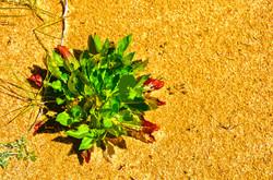 Plante - 4 – Luzeronde