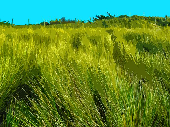 Buisson sur la dune - Luzeronde
