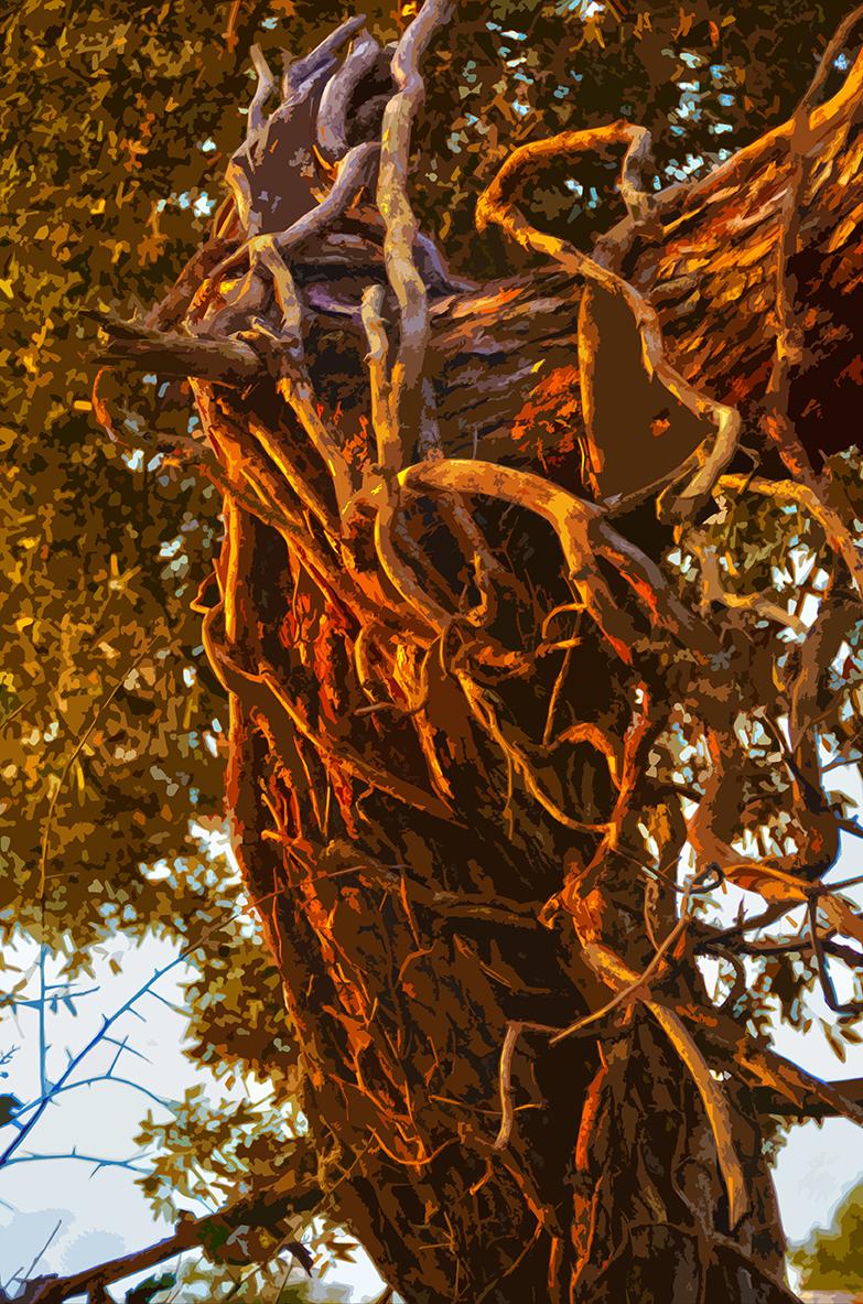 Arbre – Bois de la Chaize