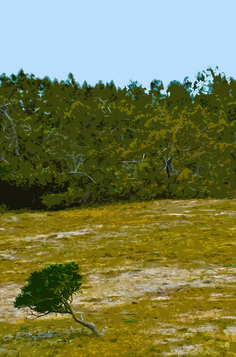 Buisson sur la dune - 5 - Luzeronde