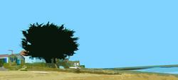 Arbre sur la plage – Le Petit Vieil