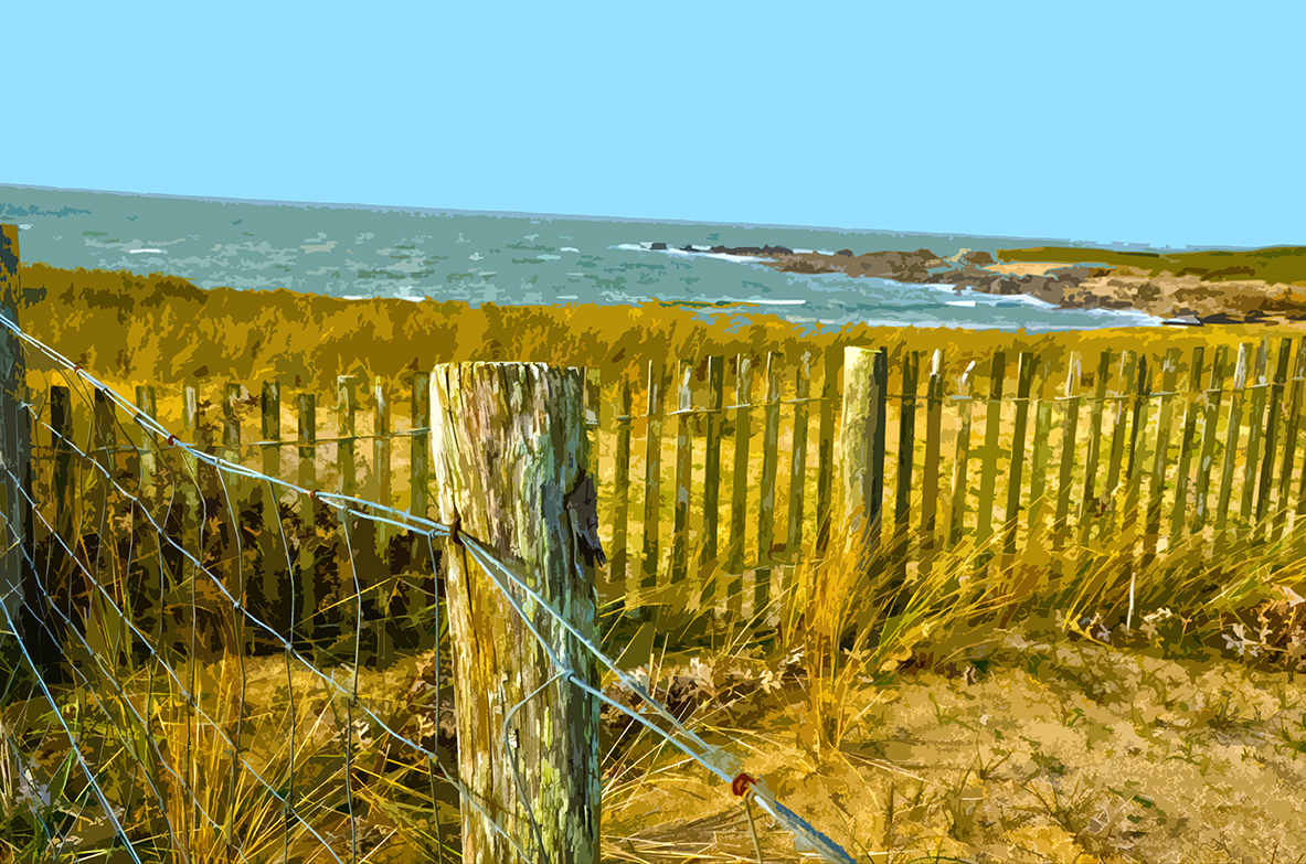 Haie sur la dune - 4 - Luzeronde