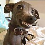 smiling_dog18.jpg