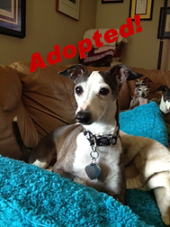 harvey_adopted - Copy.png