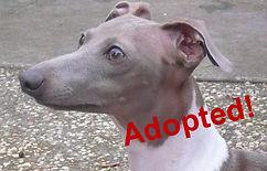 enzo_adopted.jpg