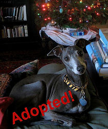 indy_adopted - Copy.jpg