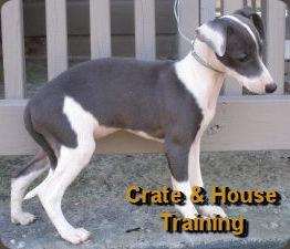 crate training.jpg
