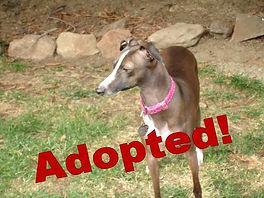 gemma_adopted.jpg