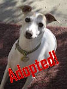 duke1_adopted.jpg