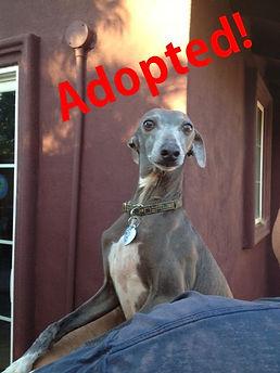 ben_adopted.jpg
