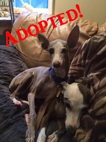 gioandmini1_adopted.png