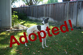 dominic01_adopted.jpg