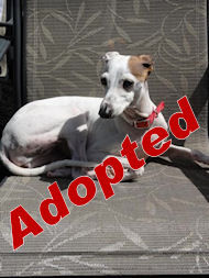 cozette1_adopted.jpg