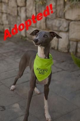 cooper_adopted.jpg