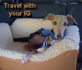 care_travel.jpg