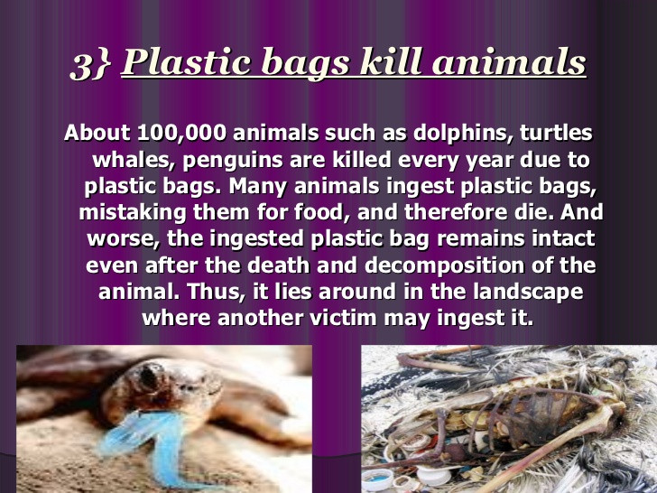 plastic bags kill animals