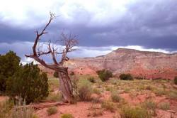 O'Keefe Tree
