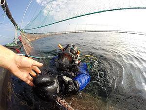 dykkertjenester yreksdykking dykking