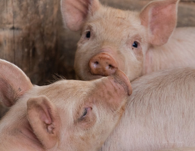 2021-03 Cattle Run Farm-PEC final (13 of