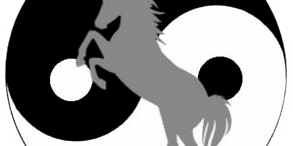 Tageskurs: Freiheitsdressur und Zirkuslektionen