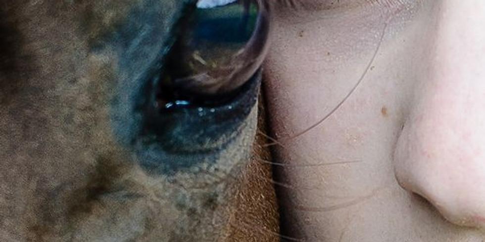 Pferdegestützte Therapie (Einzelstunde)