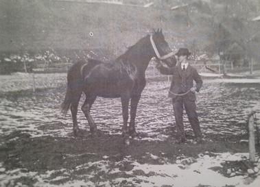 Erlenbacher Pferd