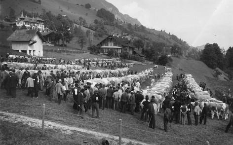 Viehmarkt in Erlenbach