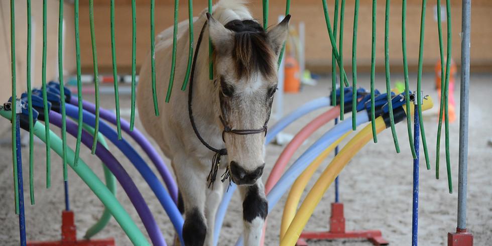 Online Jahreskurs Horse Agility