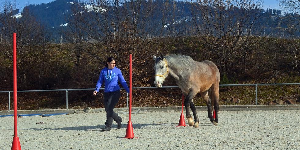 Horse Agility Weiterführungskurs