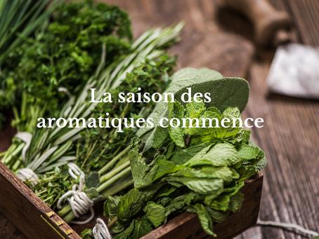 La saison des aromatiques commence !