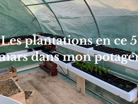 Les plantations en ce 5 mars dans mon potager