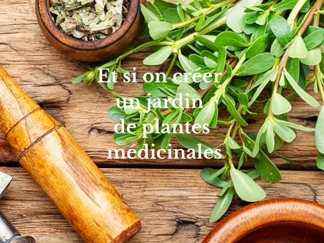 Et si on créer un jardin de plante médicinales !