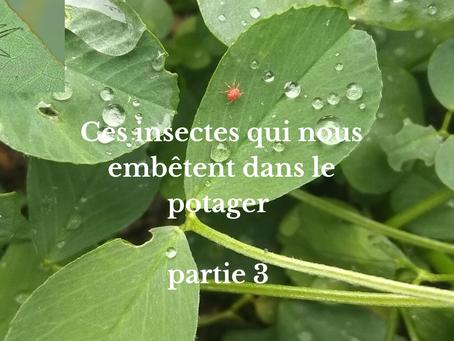 Ces insectes qui nous embêtent dans le potager partie 3