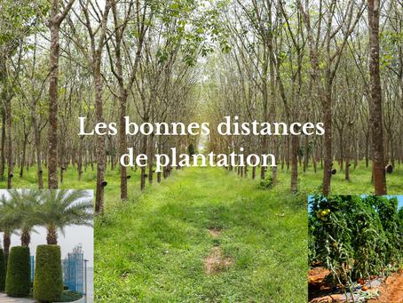 Les bonnes distances de plantation