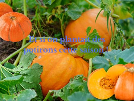 Et si on plantait des potirons cette saison !