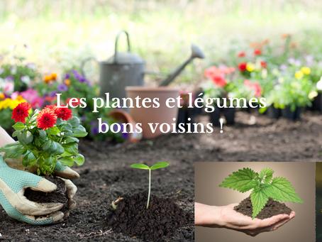 Les plantes et légumes bons voisins !