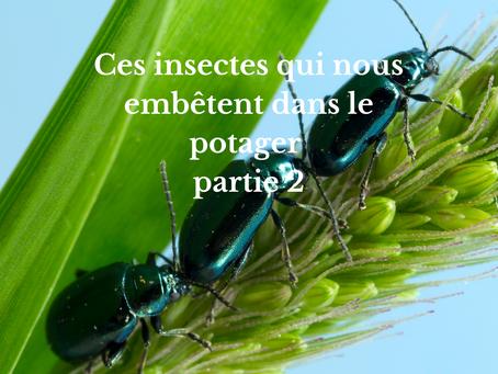 Ces insectes qui nous embêtent dans le potager partie 2