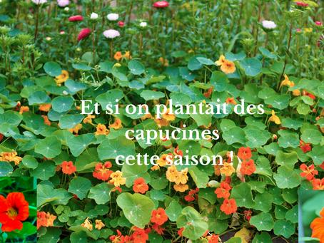 Et si on plantait des capucines cette saison !