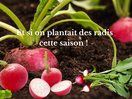 Et si on plantait des radis cette saison !