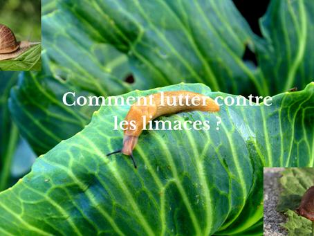 Comment lutter contre les limaces ?