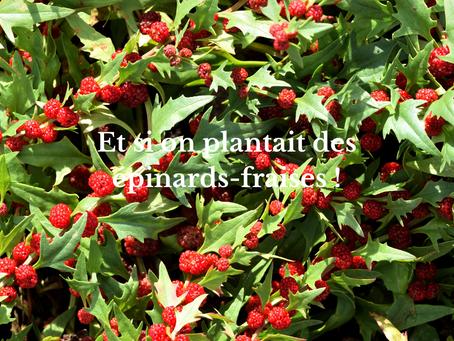 Et si on plantait des épinard-fraises !