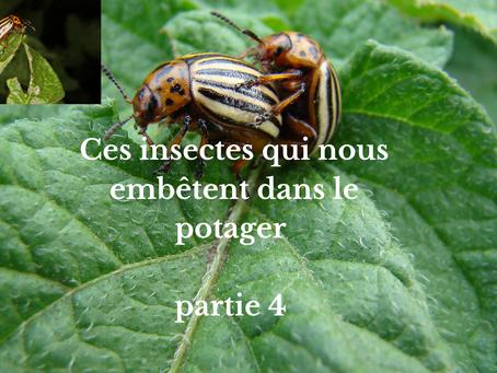 Ces insectes qui nous embêtent dans le potager partie 4