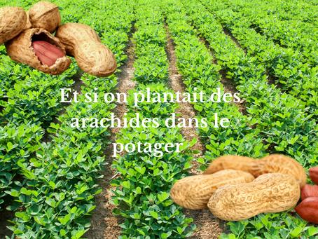 Et si on plantait des arachides dans le potager