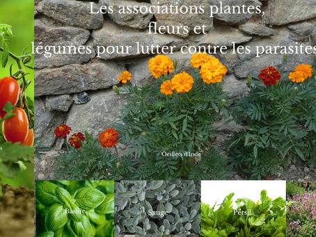Les associations plantes, fleurs et légumes pour lutter contre les insectes indésirables.