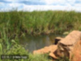 Locality Kabungu River CD16-7
