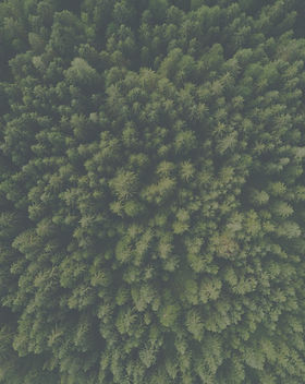 Aerial%20view%20of%20a%20green%20forest_