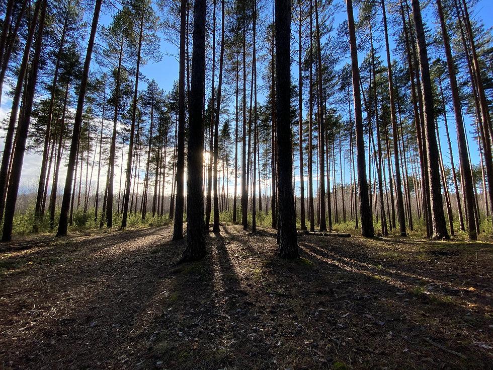 Forest Landowner