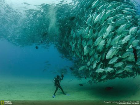 Tornade de poissons