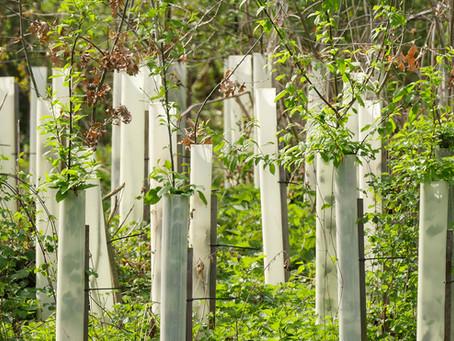 Biochar for Tree Planting