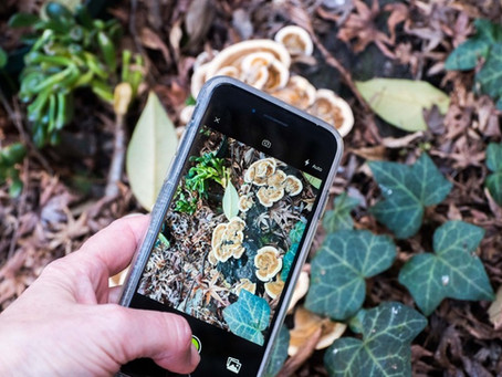 WHY WE LOVE iNATURALIST